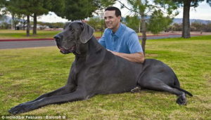 biggest-dog3