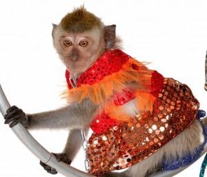 Живая-обезьянка-1-300x257
