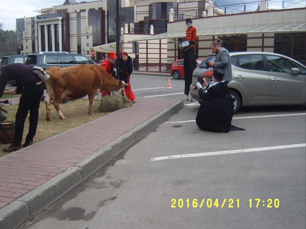 Корова на съемку