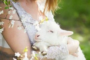 овечка, ягненок на праздник - 8 916 - 702-11-08