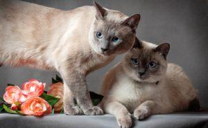Кошки на съемку