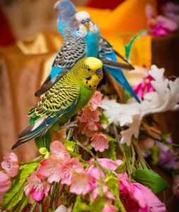 Волнистые попугаи - 8(916)702-11-08