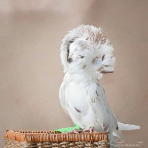 голуби 9