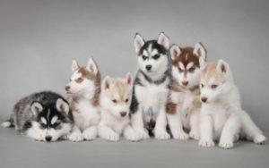 Фото собак в студии