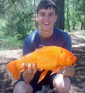 samye-bolshie-zolotye-rybki-2