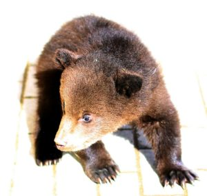 медвежата на праздник