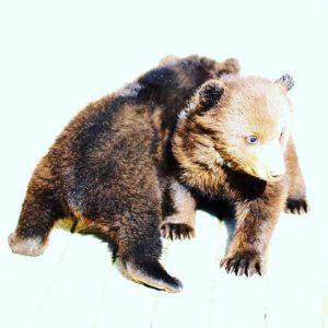 медвежонок на съемку
